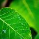 jfcs-going-green